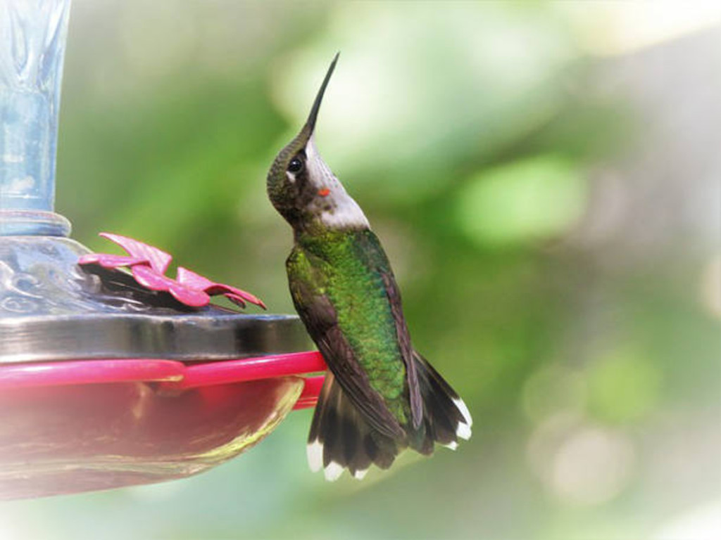 Hummingbird sitting on a feeder