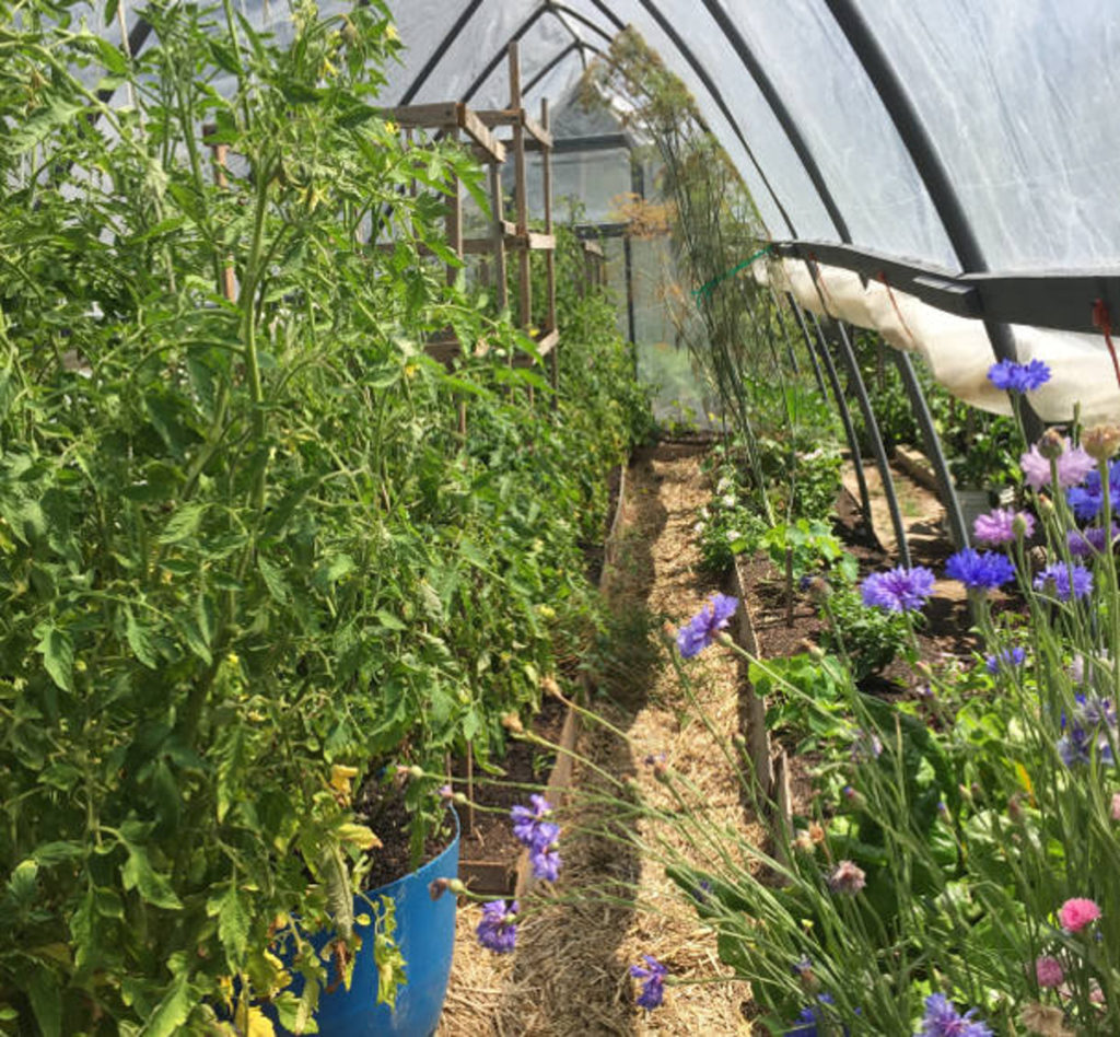 inside hoop house